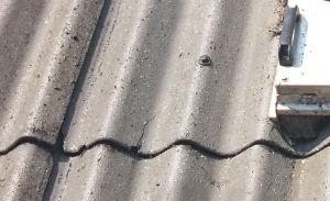 Eksempel på ikke egnet bølgeeternit tagplade til tagrensning og maling med revner og urenheder selv hvor rensemaskinen har været